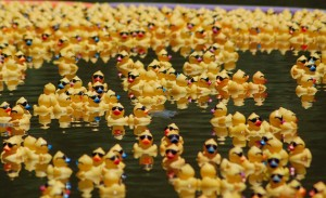 20100611-ducks